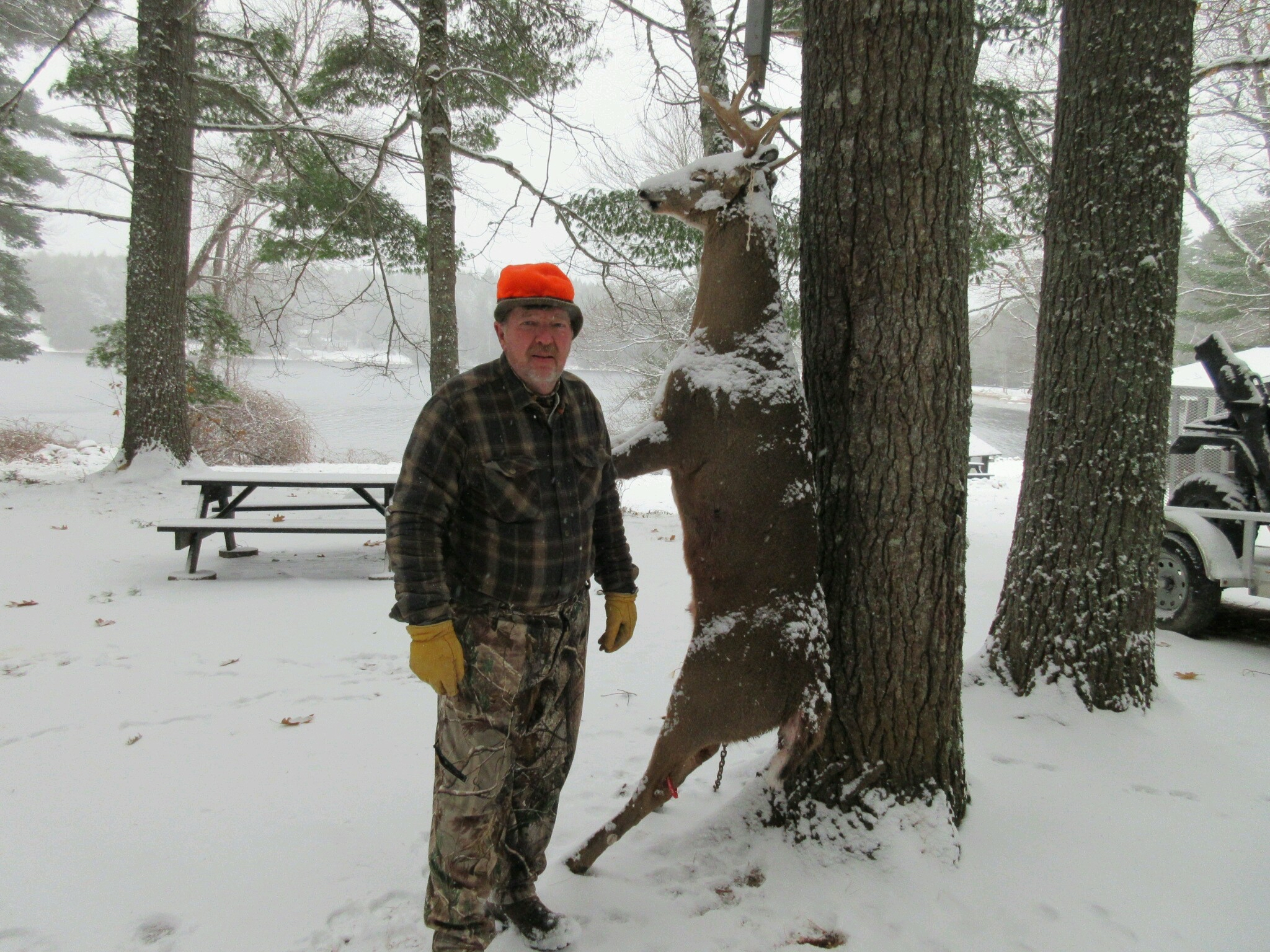 Man and deer